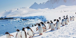 Cape Horn to the Penguins of Antarctica