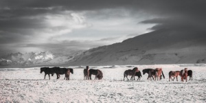Christmas & Northern Lights Adventure